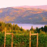 Celista Estate Winery