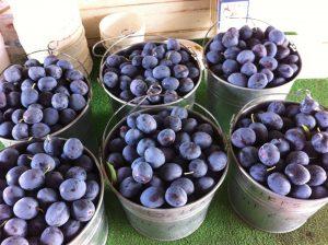 Geier's Fruit & Berry Farm