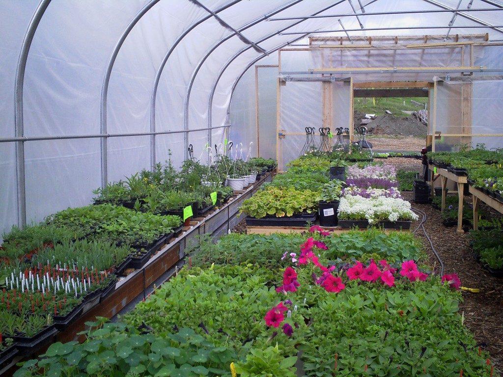 Notch Hill Organic Farm & Nursery