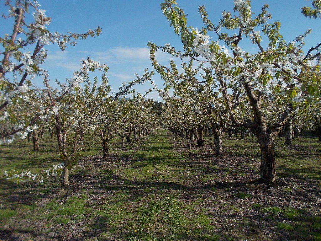 Sandy Acres Berry Farms