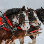 Horse Drawn Okanagan